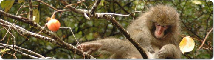 monkey_pan.jpg