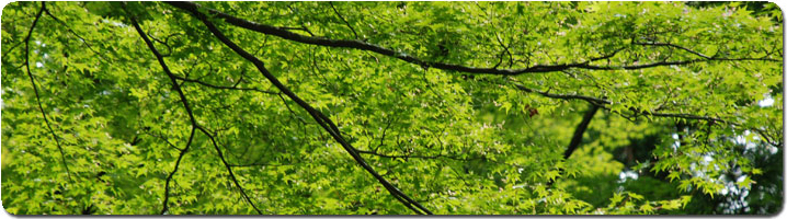 green-leaves-pan.jpg