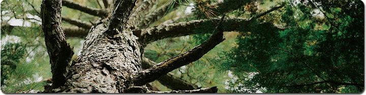 tree-KT_0.jpg