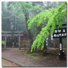 hosshinmon-oji-spring-leave.jpg