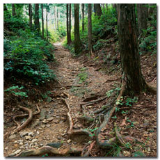 kumano-kodo-trail-nakahechi.jpg