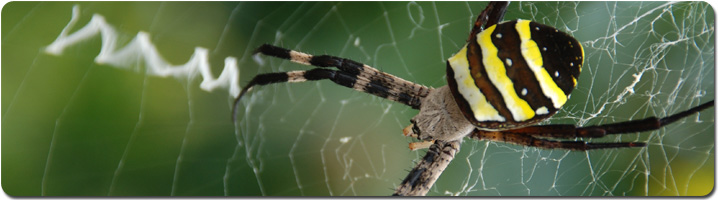 spider_pan.jpg