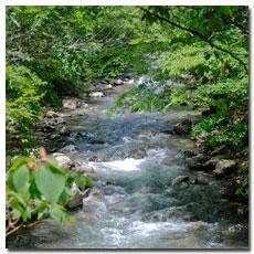 mountain-stream.jpg