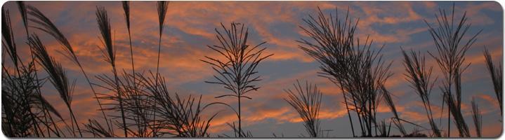 Grass_silhouette.jpg