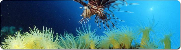 undersea_panorama.jpg