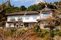 Kashiwagi-mikan-11.jpg