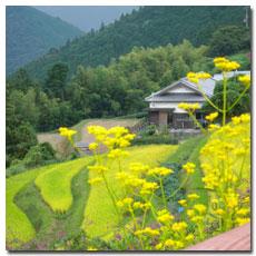 takahara-view