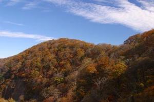 護摩壇山の紅葉