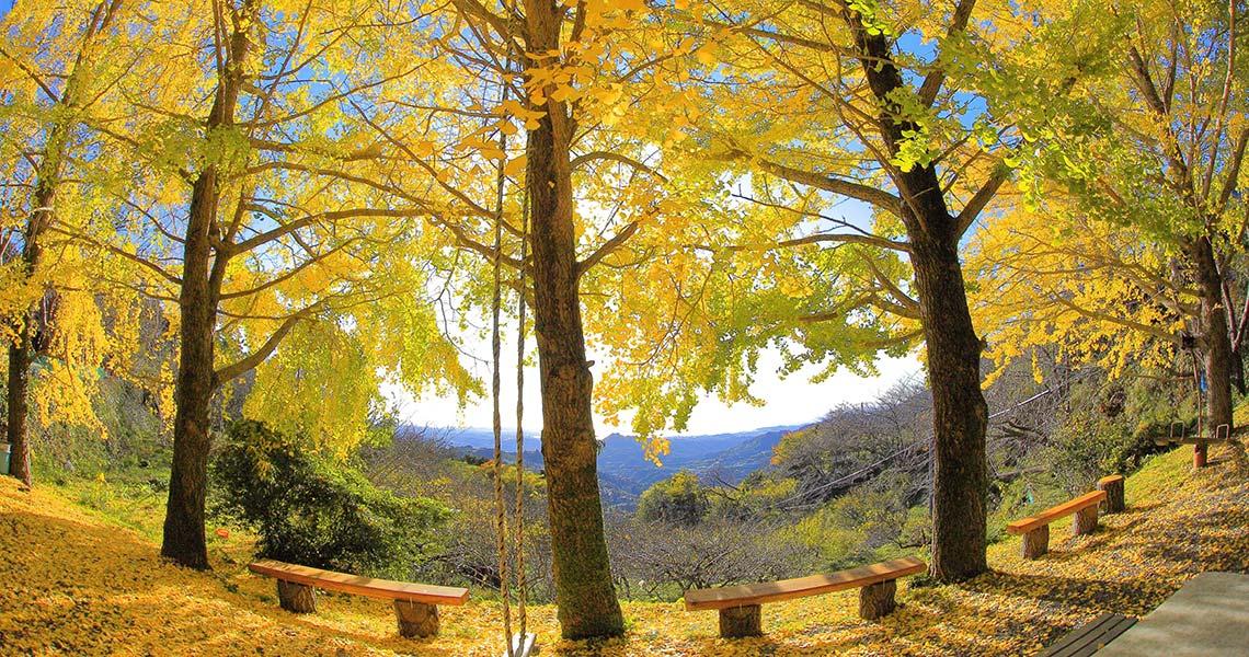 熊野古道中辺路 潮見峠越 水呑峠 ひるね茶屋の紅葉
