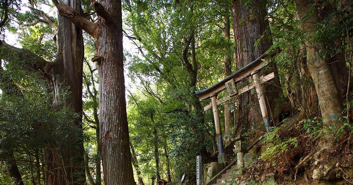 野中の一方杉と継桜王子