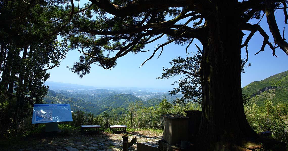熊野古道中辺路 潮見峠越 捻木の杉
