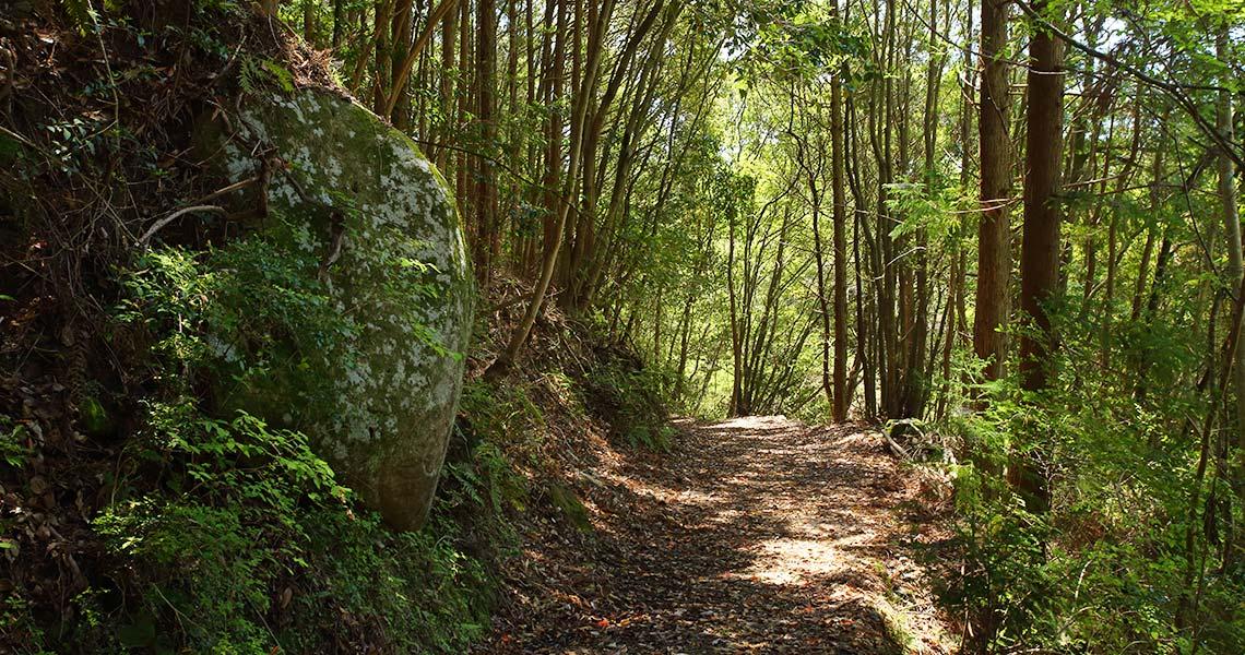 熊野古道中辺路 潮見峠越 潮見峠の古道