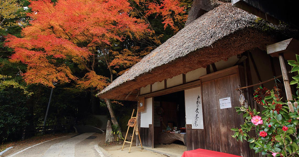 とがの木茶屋と紅葉